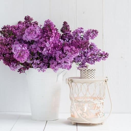 kwiat bzu świeca sojowa