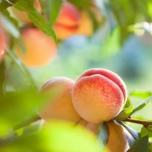 świeca o zapachu brzoskwini